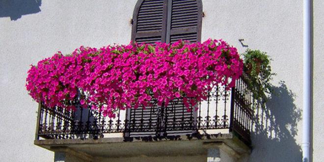 Balconi fioriti Bistagno