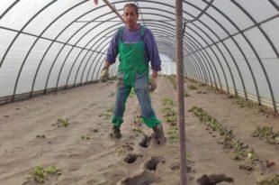 alluvione danni in agricoltura