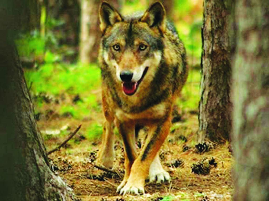 Photo of Sulle tracce del lupo: escursione nel parco del Beigua