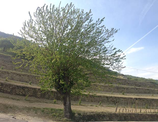 paesaggio-langa