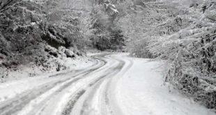 alberi caduti per la nevicata