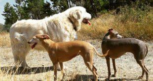 A Ovada multe da 50 a 500 euro per chi non raccoglie le deiezioni dei cani