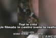 Topi in centro storico (VIDEO)