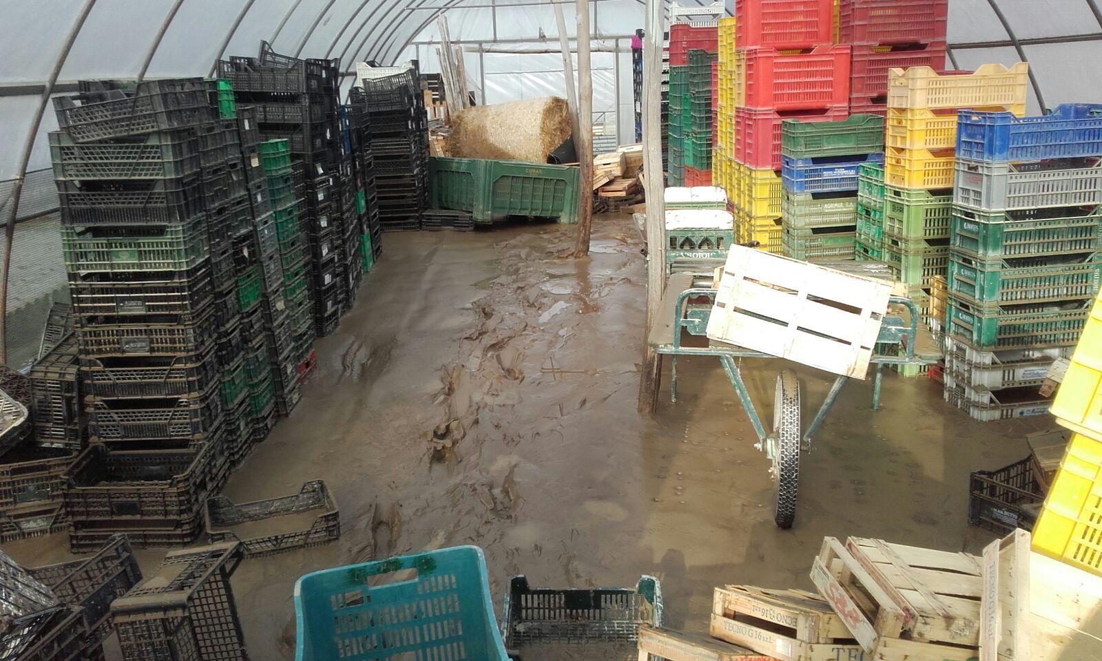 Ripristino delle strutture aziendali agricole