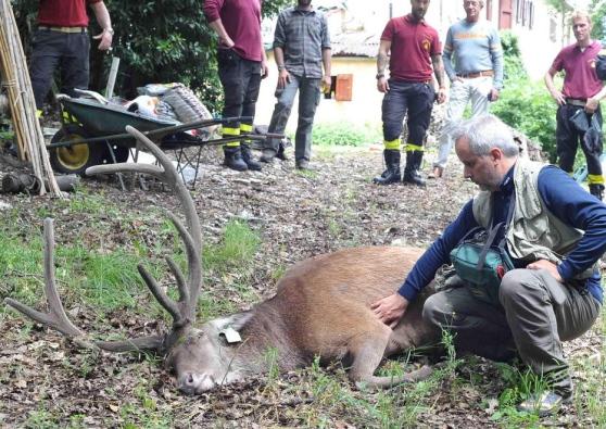 Soccorso animali selvatici: serve numero unico per il soccorso