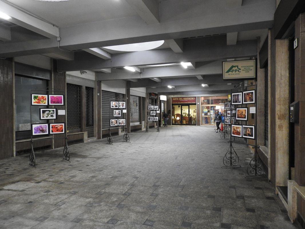 Chiusa la mostra in Galleria Garibaldi ad Acqui
