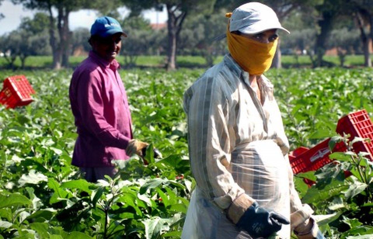 Lavoratori nelle vigne