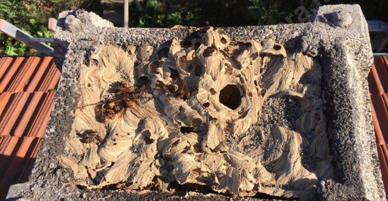 Il camino ostruito dai calabroni un nido degno di un archistar