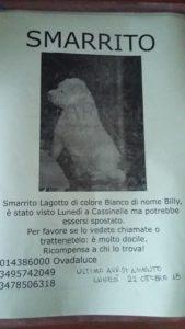 locandina cane smarrito