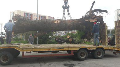 rimozione albero caduto
