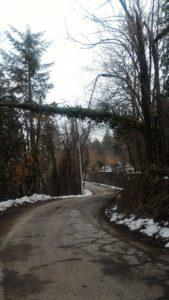 alberi sulla strada