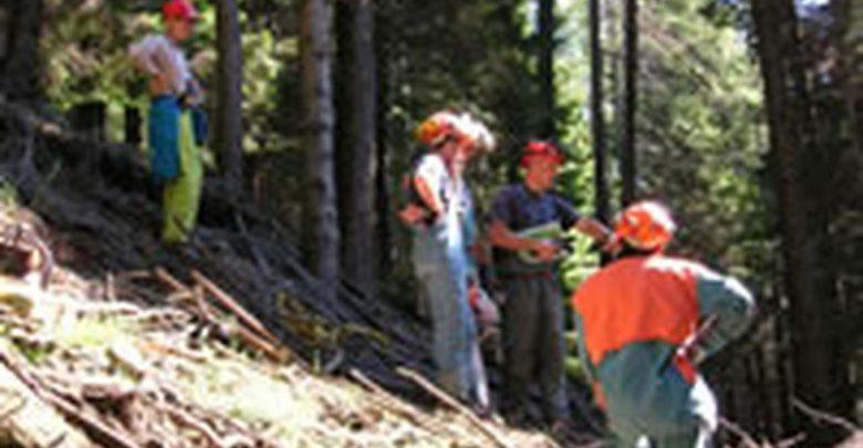 Approvata la Ripartizione della pianta organica degli operai forestali