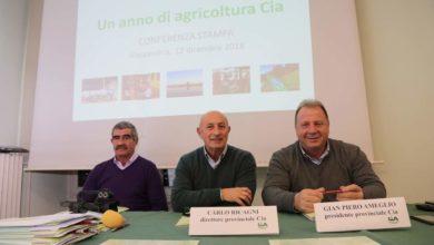Produzioni agricole 2018: l'analisi della Cia