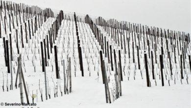 """Neve sul Basso Piemonte, Coldiretti: """"Boccata di ossigeno"""""""