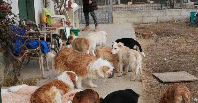 Una veterinaria per gli ospiti del canile