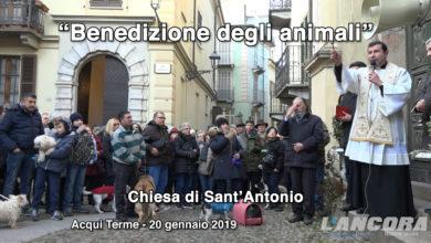 Acqui Terme - Benedizione degli animali 2019 (VIDEO)