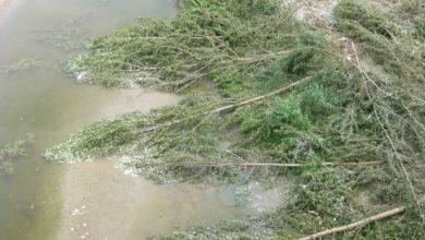 fiume, verde