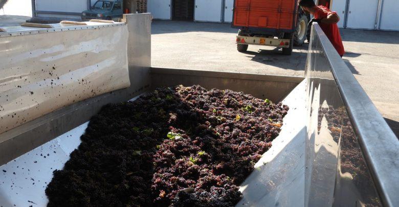 Ocm vino: misura investimenti prorogata al 25 febbraio