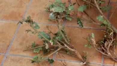 Photo of Influenza aviaria e danni da fauna selvatica