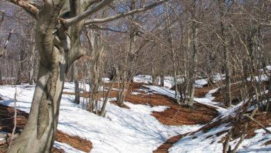 Montagna e foreste