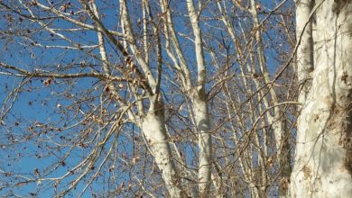 Photo of Potatura degli alberi in città