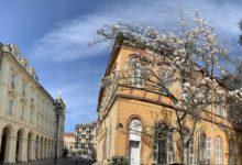magnolia dei giardini dal Liceo Classico