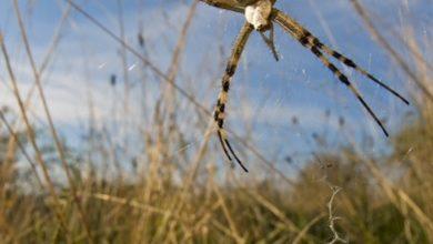 Andar per… ragni il giorno di Pasquetta