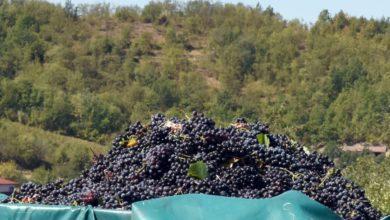 Photo of L'Ovada docg passa da 19 aziende vitivinicole