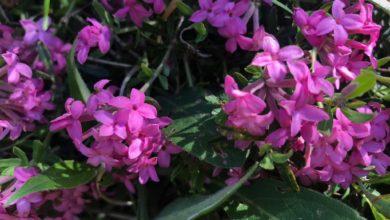 Domenica di primavera nel Beigua Geopark