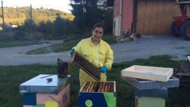 """Maltempo, allarme per le api: """"Dobbiamo nutrire le famiglie"""""""