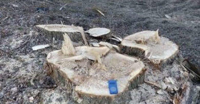 In un'area protetta europea, distrutto un bosco ripariale lungo il Fiume Bormida con alberi secolari