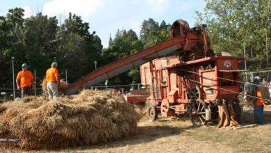 Nell'ultimo decennio è scomparso un campo di grano su cinque