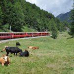 """In cento con don Flaviano sul """"Trenino Rosso"""" del Bernina"""