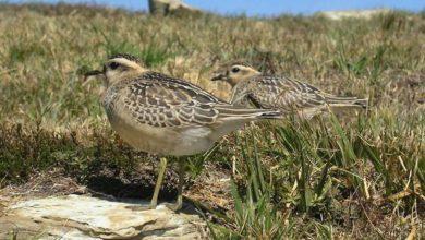 Photo of Una giornata dedicata al birdwatching