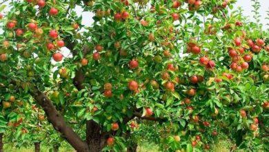 Photo of Un corso dedicato alla potatura estiva e all'innesto delle piante fruttifere