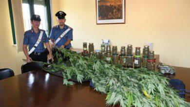 Photo of Carabinieri di Acqui, arrestano 60enne, nel giardino 18 piante di canapa indiana
