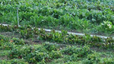Photo of Ok a spostamenti per chi coltiva orto per hobby, anche in zona rossa