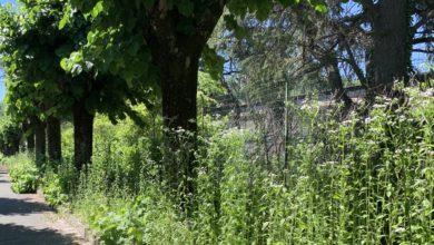 Photo of Silvicoltura e verde: Cia Alessandria chiede la riapertura delle attività