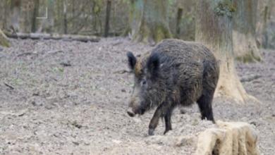 Photo of Fauna selvatica: per Confagricoltura è un'emergenza non più rinviabile