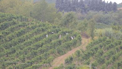 Photo of Piemonte: le misure a sostegno dell'agricoltura