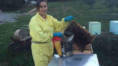 """Photo of Giornata mondiale dell'ape, Cia: """"Specie da tutelare"""""""