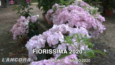 Photo of Ovada – Fiorissima 2020 (video)