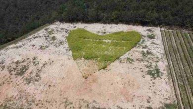 Photo of Vesime: disegnato in prato un grande cuore
