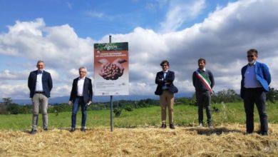 Photo of Campo sperimentale sul Nocciolo