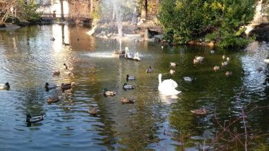 Photo of Nuovamente visitabile il bel Parco di Villa Gabrieli