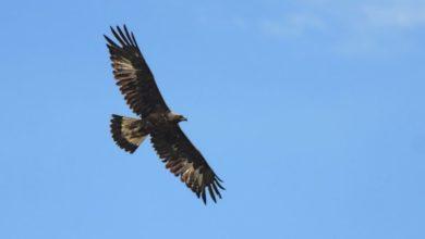 Photo of Domenica nel Parco del Beigua sulle ali delle aquile
