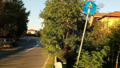 Photo of Il verde invade la Provinciale per Molare